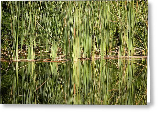 Reeds Of Reflection Greeting Card