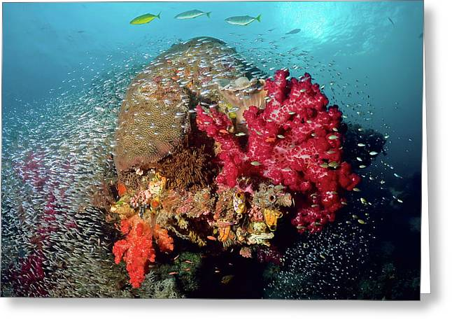 Reef Scenics, Raja Ampat Islands, Irian Greeting Card by Jaynes Gallery