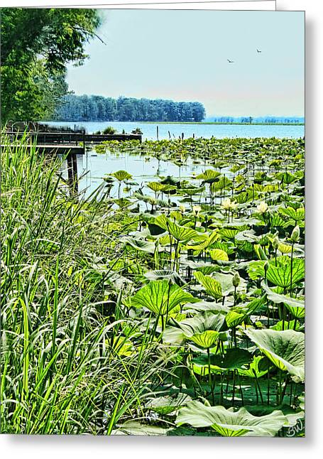 Reelfoot Lake Lilly Pads Greeting Card