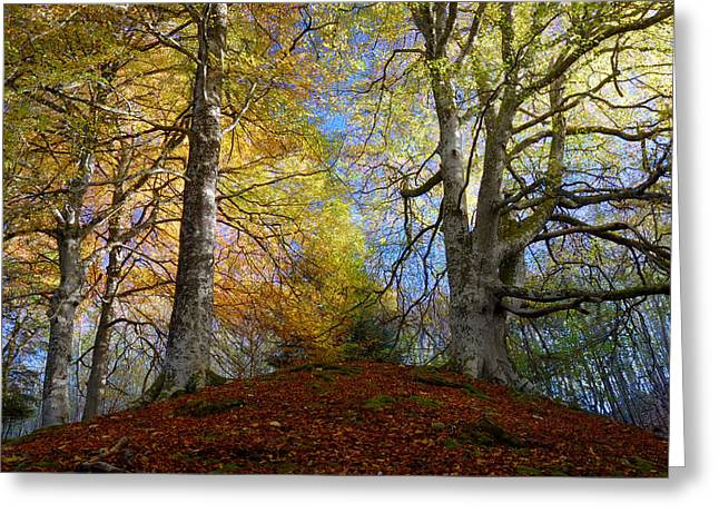 Reelig Forest  Greeting Card