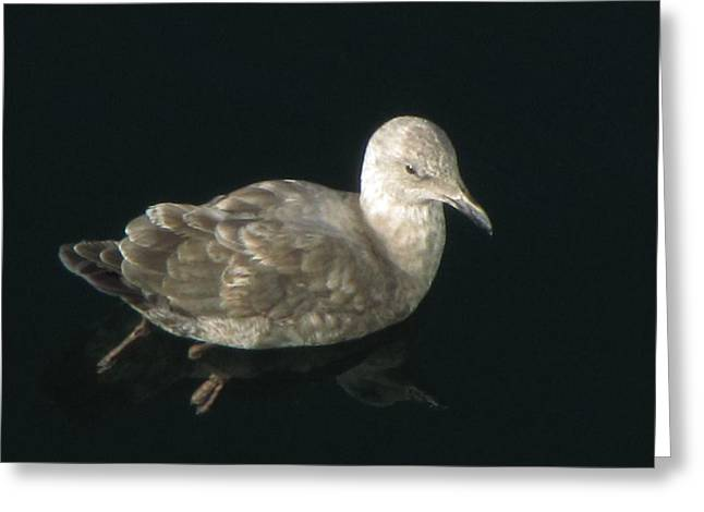 Refections Of A Gull Greeting Card
