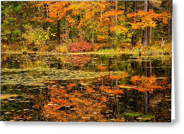 Reflecting Colors Greeting Card by Karol Livote