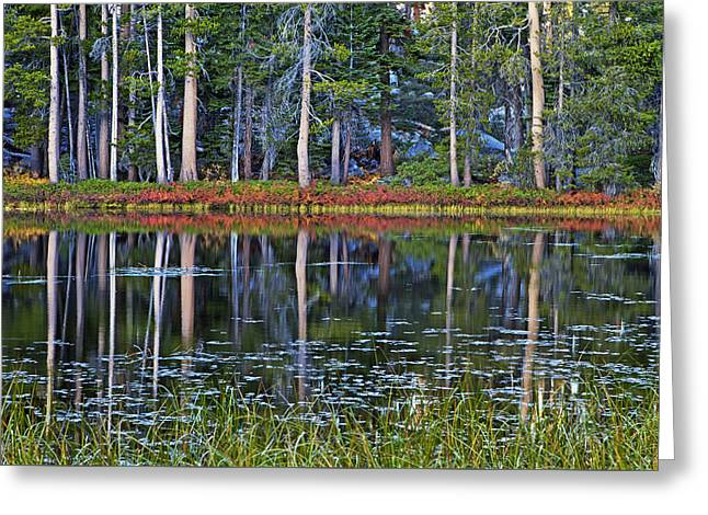 Reflecting Nature Greeting Card by Duncan Selby