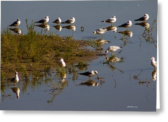 Reflecting Pool Greeting Card by Dick Botkin
