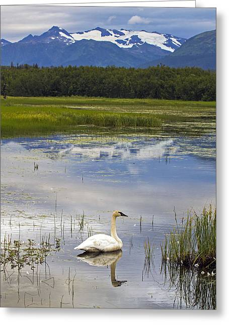Reflecting Swan Greeting Card