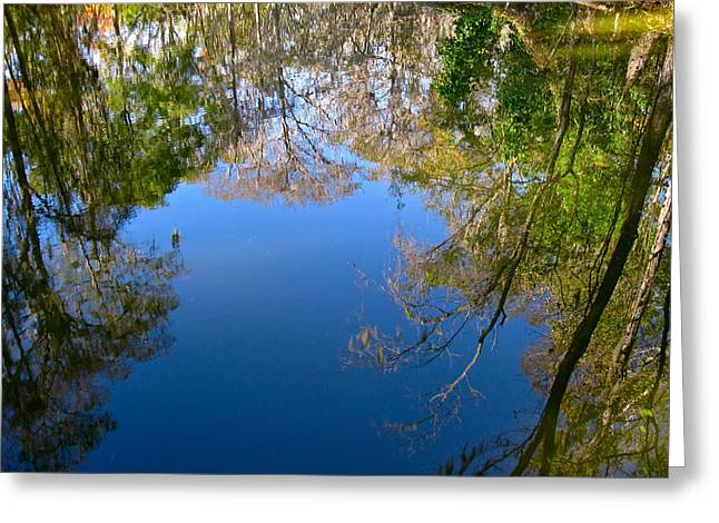 Reflection Greeting Card by Denise Mazzocco