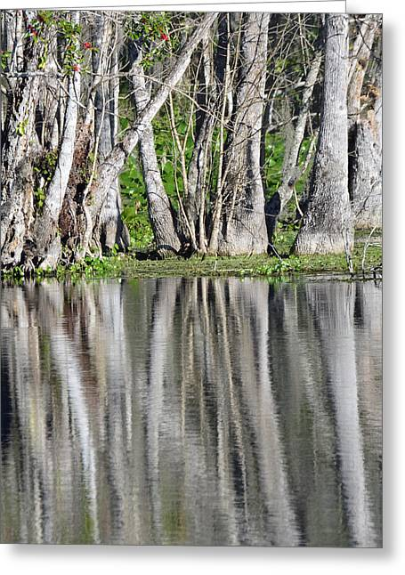 Reflection In Silver Springs River Greeting Card