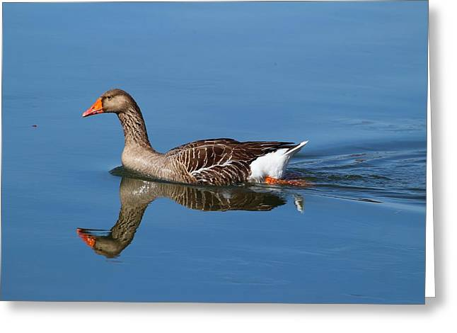 Greeting Card featuring the photograph Reflection by Lynn Hopwood
