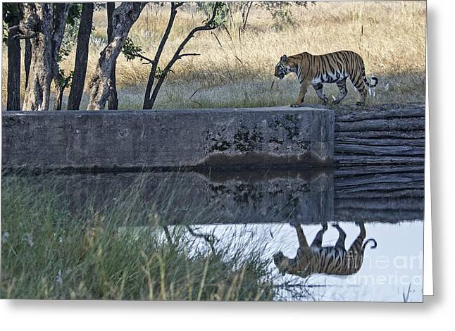 Reflection Of A Tiger Greeting Card