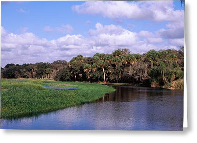 Reflection Of Clouds In A River, Myakka Greeting Card by Panoramic Images