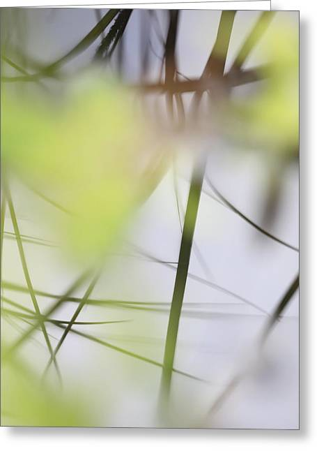 Reflection Of Grasses In The Surface Of A Lake - Available For Licensing Greeting Card by Ulrich Kunst And Bettina Scheidulin