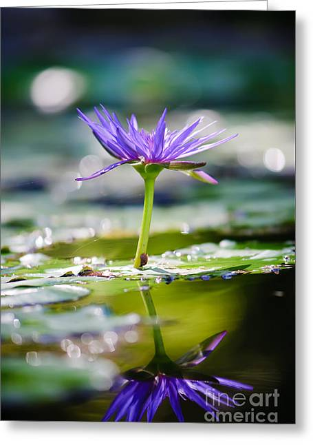 Reflection Of Life Greeting Card by Charles Dobbs
