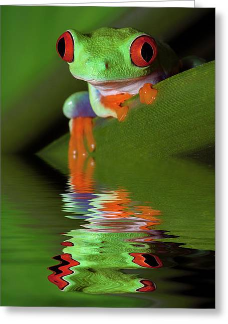 Reflection Of Red-eyed Tree Frog Greeting Card by Jaynes Gallery