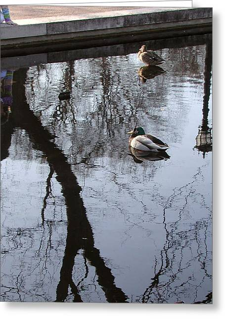 Reflection Of The Watcher Greeting Card by Jack Adams