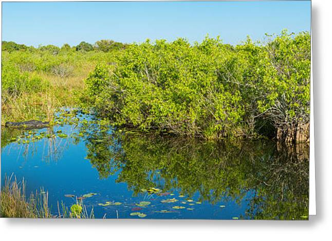 Reflection Of Trees In A Lake, Anhinga Greeting Card