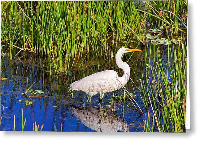 Reflection Of White Crane In Pond Greeting Card by Panoramic Images