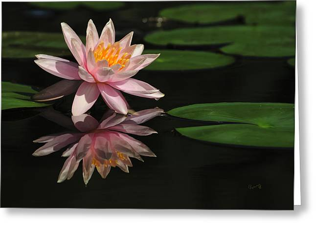 Reflection Greeting Card by Penny Lisowski
