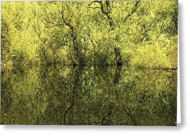 Reflections 5 Greeting Card by Vessela Banzourkova