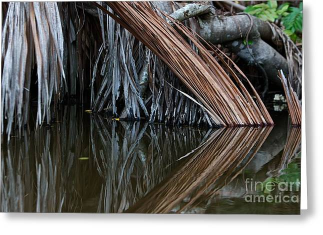 Reflections  Greeting Card by Gary Bridger