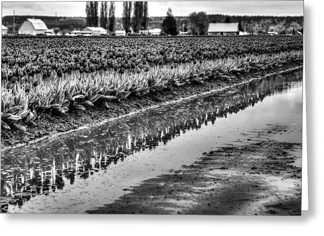 Reflections In Black And White Greeting Card by Brian Xavier