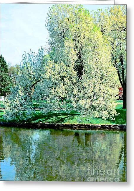 Reflections In Lake Greeting Card by Kathleen Struckle
