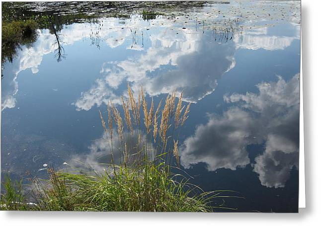 Reflections In The Water Greeting Card by Carolyn Reinhart
