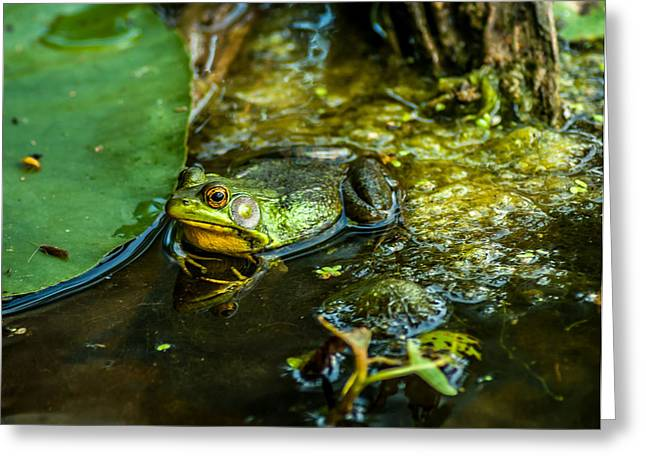 Reflections Of A Bullfrog Greeting Card by Optical Playground By MP Ray