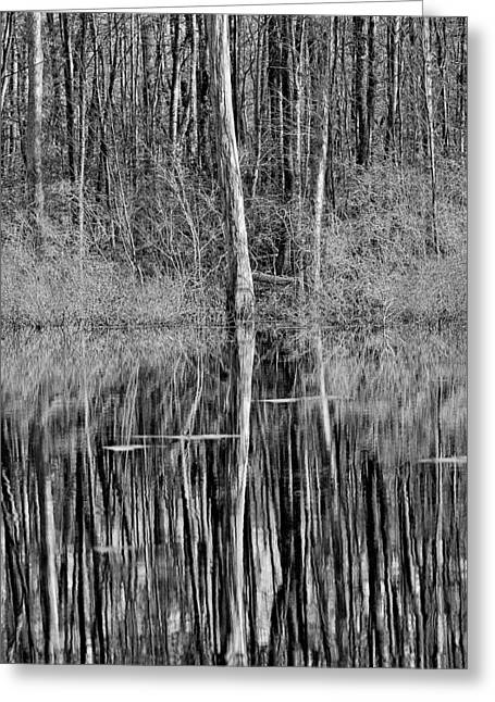 Reflections Of A Swamp Greeting Card
