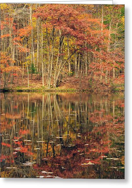 Reflections Of Fall Greeting Card by Dan Myers