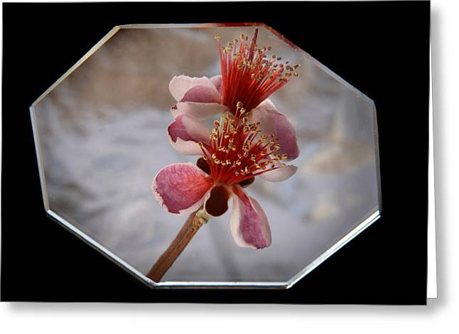 Reflections Of Feijoa Greeting Card by Terence Davis