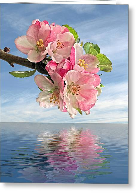 Reflections Of Spring At Apple Blossom Time Greeting Card