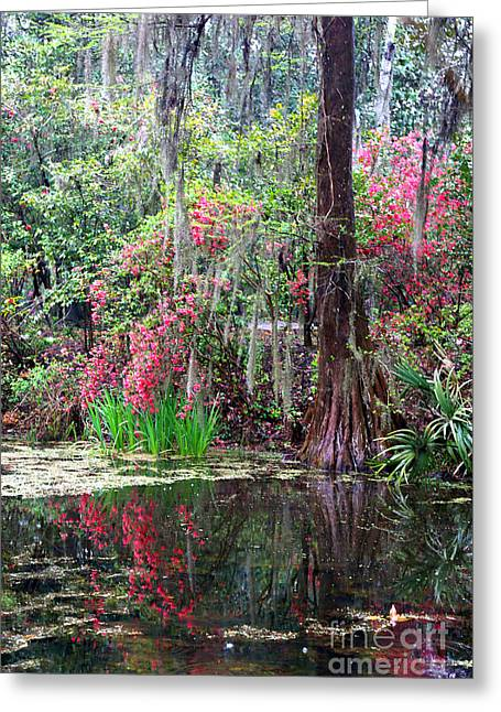 Reflections Of Spring In The South - Digital Painting Greeting Card