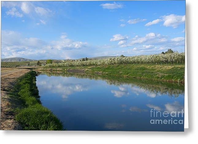 Reflections Of Spring Greeting Card by Mike  Dawson