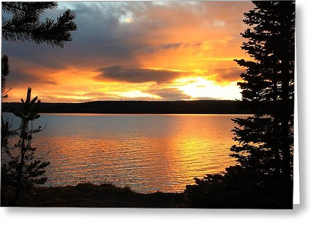 Reflections Of Sunset Greeting Card by Athena Mckinzie