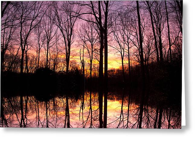 Reflections Of The Day Greeting Card by Daphne Sampson