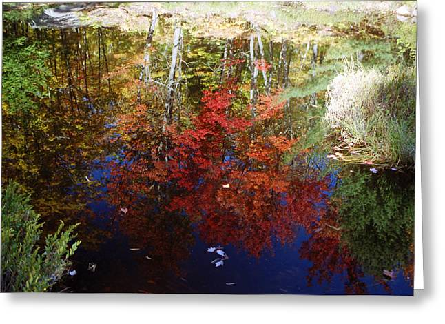 Greeting Card featuring the photograph Reflections On Algonquin by David Porteus
