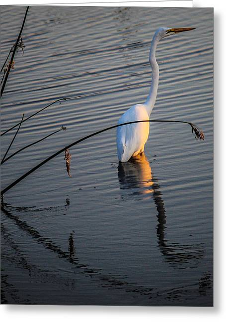 Reflections One Greeting Card by Lesley Brindley