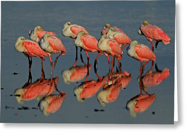 Reflections Greeting Card by Stefan Carpenter