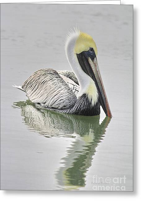 Reflective Pelican Greeting Card by Deborah Benoit