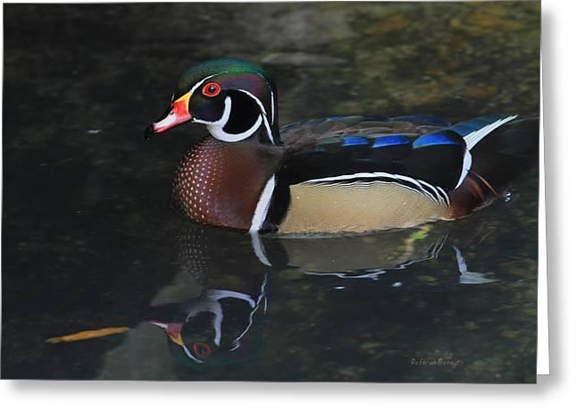 Reflective Wood Duck Greeting Card by Deborah Benoit