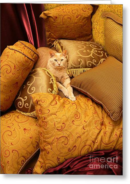 Regal Feline Greeting Card by Amy Cicconi