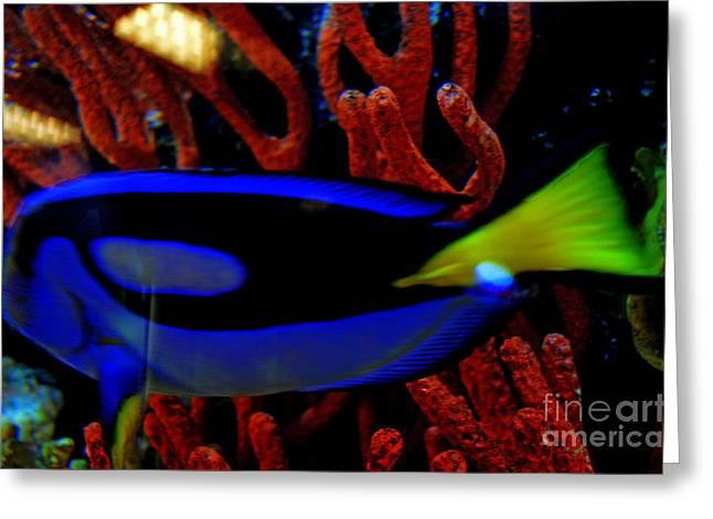Regal Tang Blue Fish Beauty Greeting Card