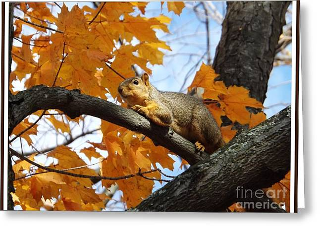 Relaxing In The Trees Greeting Card by Sara  Raber