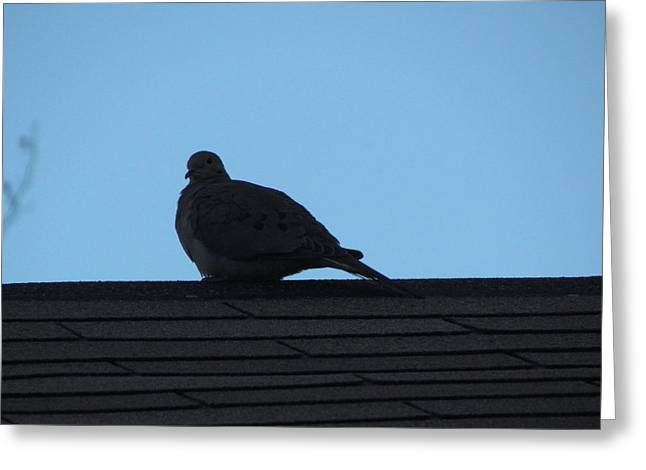 Relaxing On The Roof Greeting Card by Rickey Rivers Jr