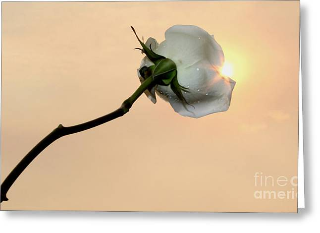 Remembering You Greeting Card by Krissy Katsimbras