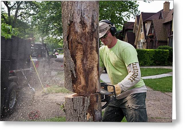 Removing Ash Borer Infected Tree Greeting Card