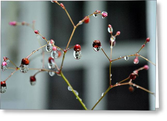 Greeting Card featuring the photograph Repeated Reflections by Kelly Nowak