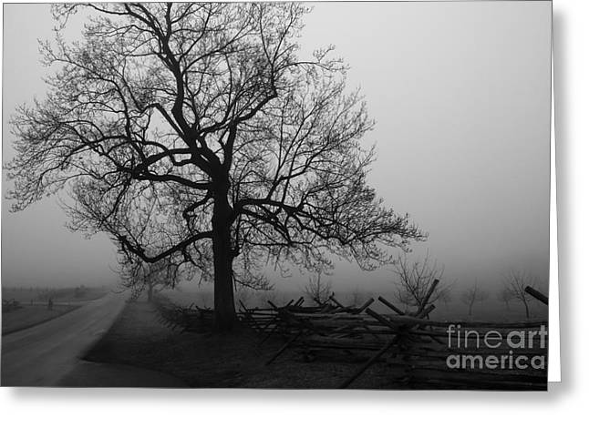 Repose In Mist Greeting Card by David Rucker