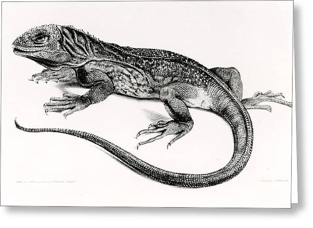 Reptile Greeting Card