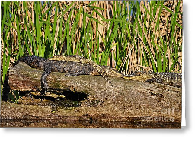 Reptile Relaxation Greeting Card by Al Powell Photography USA